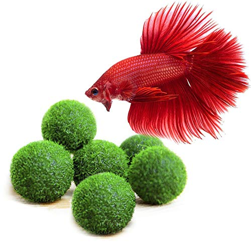 Luffy Betta Balls : Live Round-Shaped Marimo Plant : Natural Toys Betta Fish : Aquarium Safe