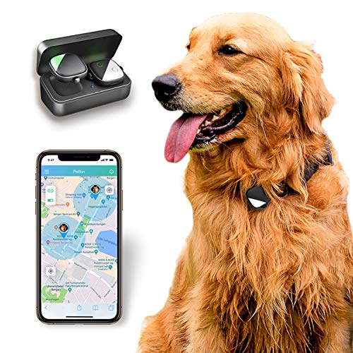 Top 10 GPS Tracker for Pets – GPS Trackers